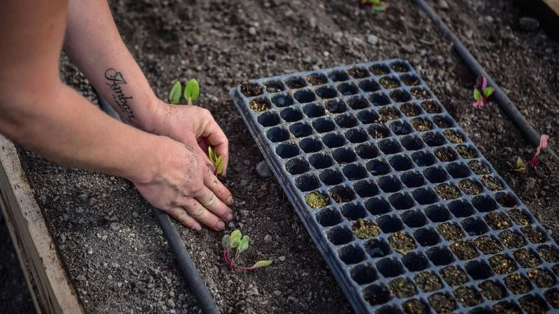 La Municipalidad de Escobar llevó adelante una jornada de siembra y trasplante de plantines en la segunda huerta agroecológica del distrito
