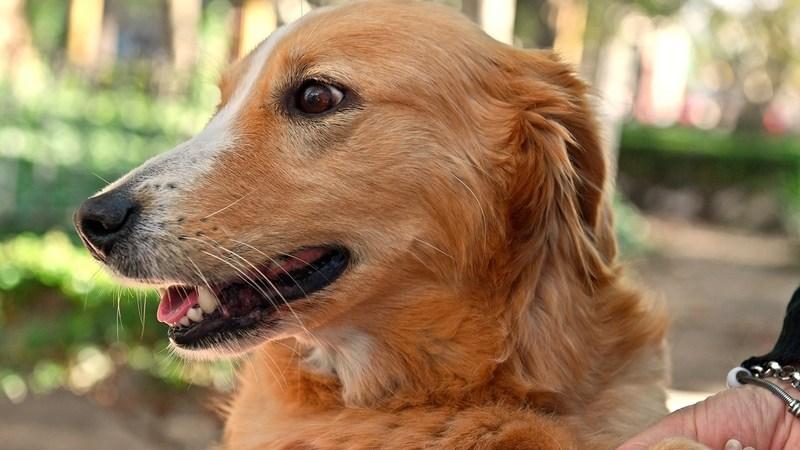 Zoonosis de San Fernando tendrá un nuevo operativo en el Delta para atender a las mascotas
