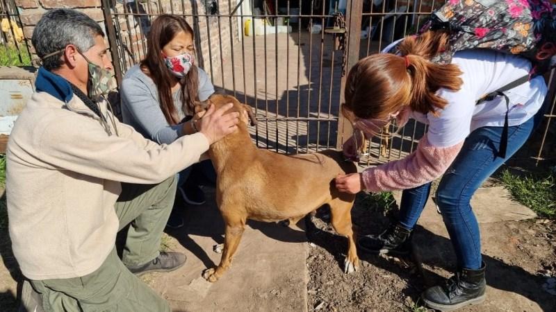 Exaltación, Zoonosis avanza con el Censo de Mascotas y realiza Castraciones en las Localidades