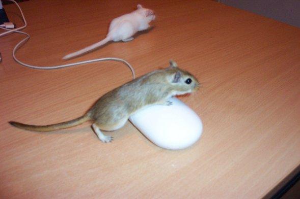 SASSY BLOG MEME: What's on your desk Wednesday? (17th June)