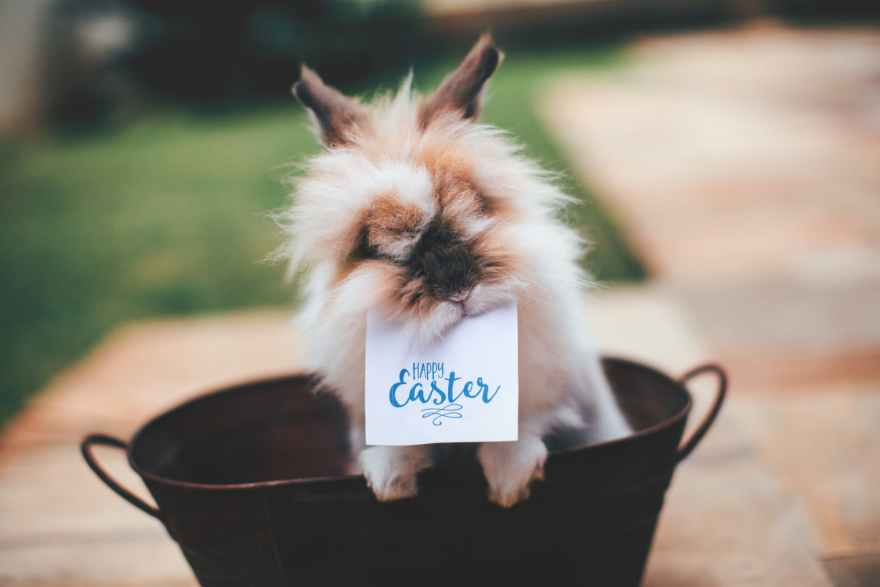 Happy Easter says the Easter Bunny in a basket