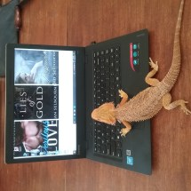 Jan Selbourne's Desk with Lexie the Lizard