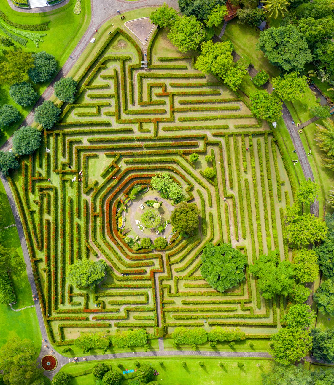 aerial photography of maze bush