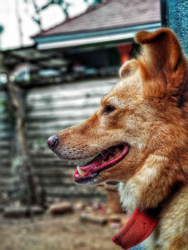 Police dog #policedog #dog #altread