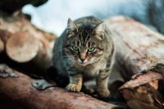 Best natural wormer for cats