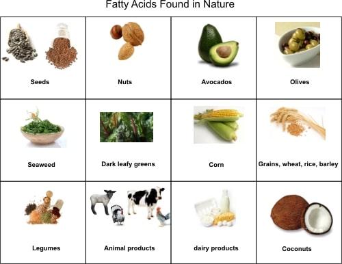Fatty Acids Found in Nature