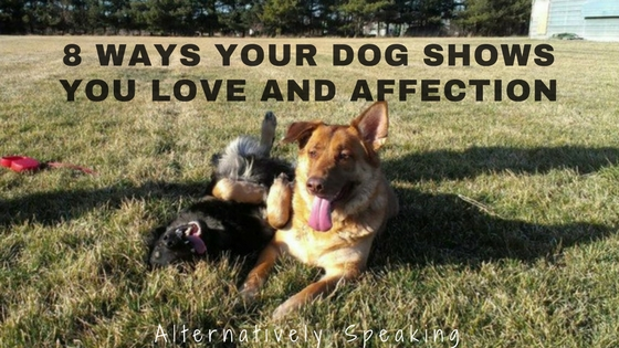 8 Ways Your Dog Shows You Love and Affection