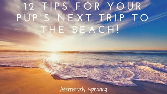 12 Tips for Your Pup's Next Trip to the Beach!