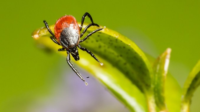 new info about Lyme disease