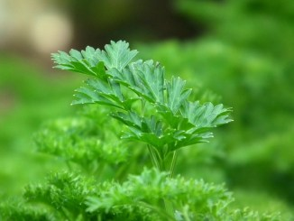 Option to consider for herbal products