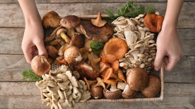 Ca mushrooms fight depression