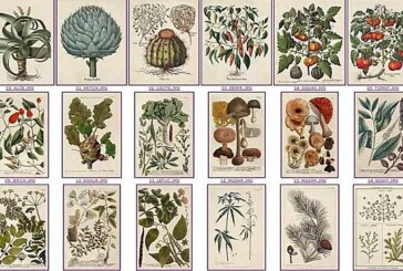 Plus de 70 plantes médicinales contre le cancer
