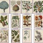 Plus de 70 plantes médicinales contre le cancer