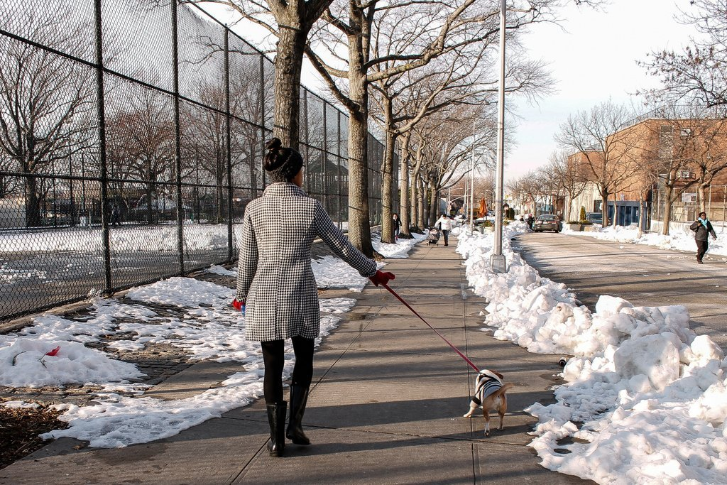 Dog walking in Jackson Heights