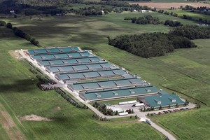 Photos taken by Cornucopia showed potential factory farm-like conditions at organic operations. It was reportedly ignored by the USDA. Click the picture to view the report.