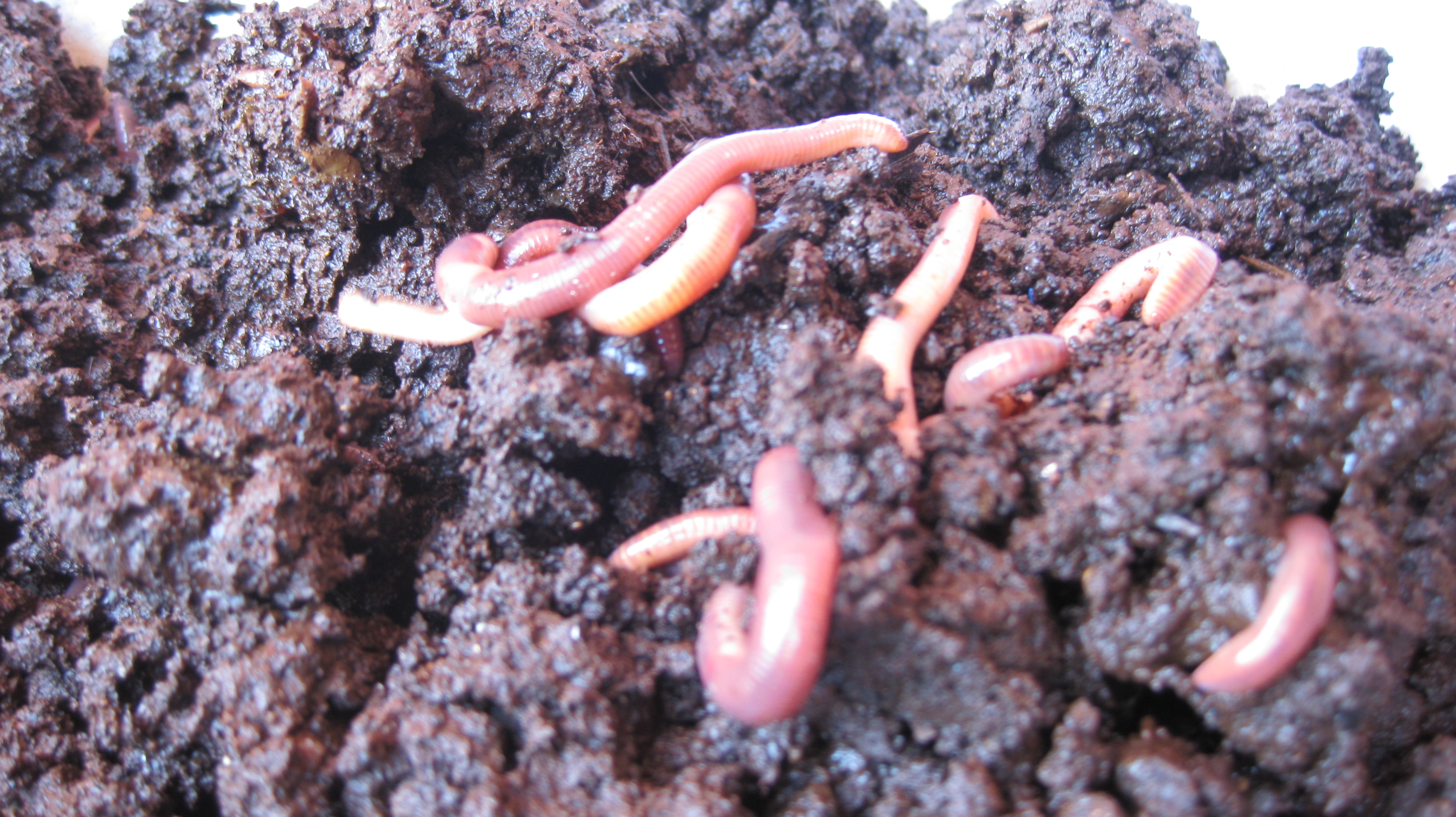 Phylum Annelida – Life as a biology student