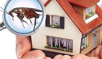 افضل شركة مكافحة حشرات بجازان