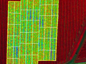 altigator drone uav agriculture ndvi nir crop yield management multispectral - FOX