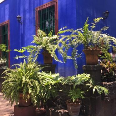 Jardin de la maison de Frida Kahlo