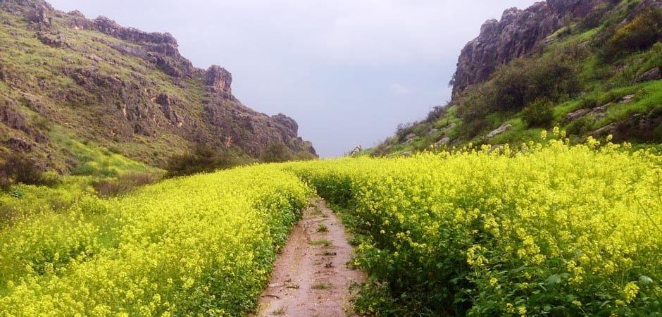 Image result for walking  trip