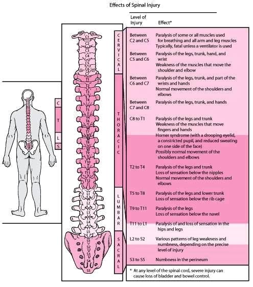 Effects of Spinal Cord Injury - Altizer Law