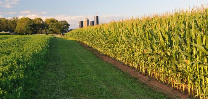 agriculture crops farm farmers
