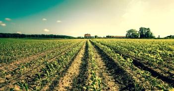 agriculture farm crops