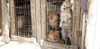puppy mill 2
