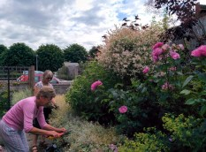 Working in the Sensory Garden July 2015