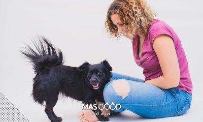 MasGood te deja un par de tips para que controles a tu perro en situaciones estresantes.