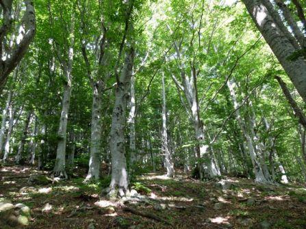 Forêt catalane
