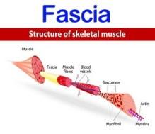 myofascial pain what is fascia