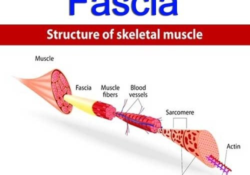 what is fascia physiotherapy toronto downtown