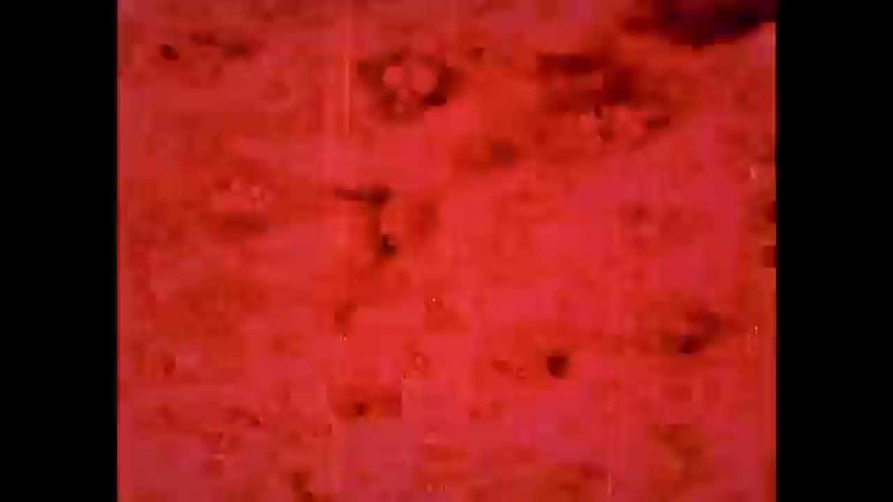 Mt. Wolf – Red