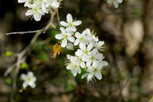 https://alturahoney.com/wp-content/uploads/2019/02/local-honey-bee-removal-albuquerque-a15-505-500-4780.jpg