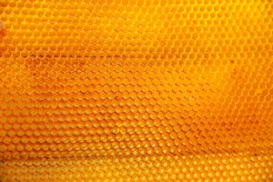 local-honey-bee-removal-albuquerque-a21-505-500-4780