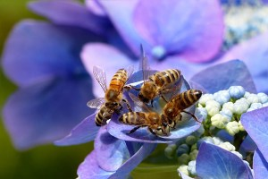 local-honey-bee-removal-albuquerque-a3-505-500-4780