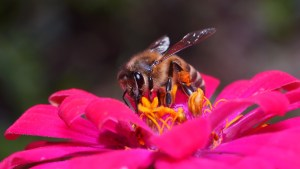 local-honey-bee-removal-albuquerque-a35-505-500-4780