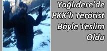 Giresun'da PKK'lı Terörist Teslim Oldu
