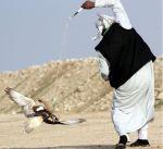 """منافسات مثيرة بنهائي مسابقة السرعة لطيور """"الجير الحر"""" بمهرجان الموروث الشعبي"""
