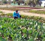 رئيس هيئة الزراعة :مشروعات متواصلة للتنمية الزراعية لرفع نسبتها بالناتج القومي