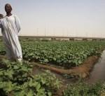 السودان يخطط لرفع صادراته الزراعية الى 10 مليارات دولار بحلول 2020