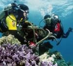 """""""الغوص"""" يوثق الشعاب المرجانية في البحر الأحمر بمدينة جدة"""