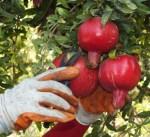 بعد رفع الحظر .. تركيا تهدف لرفع صادراتها من الخضروات والفواكه إلى روسيا لمليار دولار