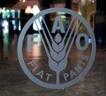 """""""فاو"""" تسجل استقرارا في أسعار الغذاء العالمية"""