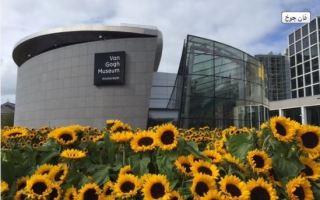 متحف فان جوخ بأمستردام.. أكثر من 100 ألف زهرة عباد الشمس تحوله للوحة فنية