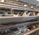 دراسة كويتية: استخدام الزيوت في علف الدجاج يزيد قيمتها الغذائية والانتاجية