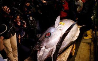 بيع سمكة تونة بأكثر من 3 ملايين دولار في مزاد بطوكيو