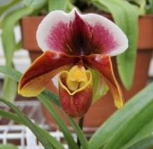 spring flower bulb show