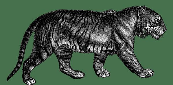 Tiger Mischief Managed